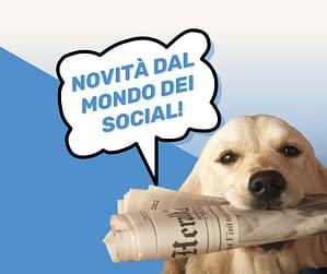 novità social 2021